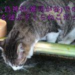 桜猫IN大鳥神社(雑司が谷)は開運・招福を運ぶ猫だった!
