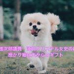 小泉進次郎×滝川クリステル結婚 授かり婚は天からのギフト