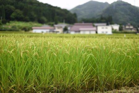 稲作 米 エネルギー