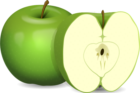 りんご 断面 トーラス